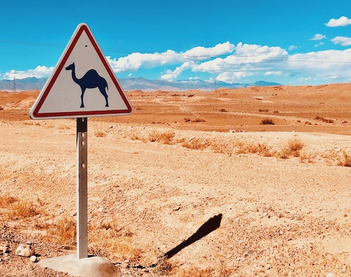 A camel sign at a desert.